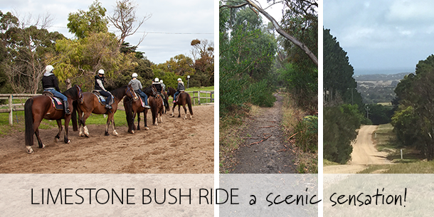 Limestone_Bush_Horse_Trail_Ride_Scenic_Mornington_Peninsula