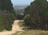 limestone-bush-horse-trial-ride-mornington-peninusla