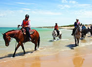 st-andrews-beach-ride-horse-riding-victoria