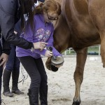 horse riding lesson