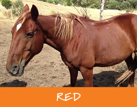 Gunnamatta_Trail_Rides_Melbourne_Red_r1_c1
