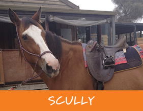 Gunnamatta_Trail_Rides_Melbourne_Scully_r1_c1