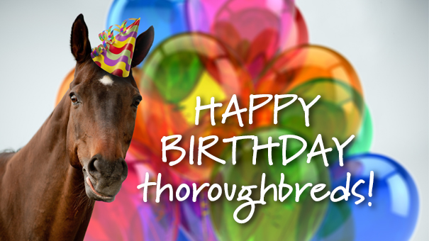 Racehorse_thoroughbred_birthday_Australia