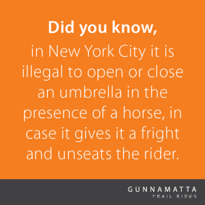 Did you know, in New York City it is illegal to open or close an umbrella in the presence of a horse, in case it gives it a fright and unseats the rider.