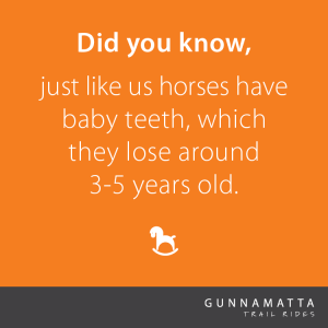 Did you know, just like us horses have baby teeth, which they lose around 3-5 years old