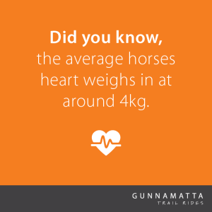 Did you know, the average horses heart weighs in at around 4kg