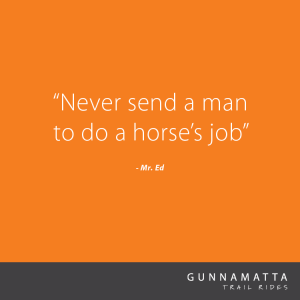 GTR_Horse_Quotes_29