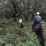 Gunnamatta horseback trail rides and activities for kids
